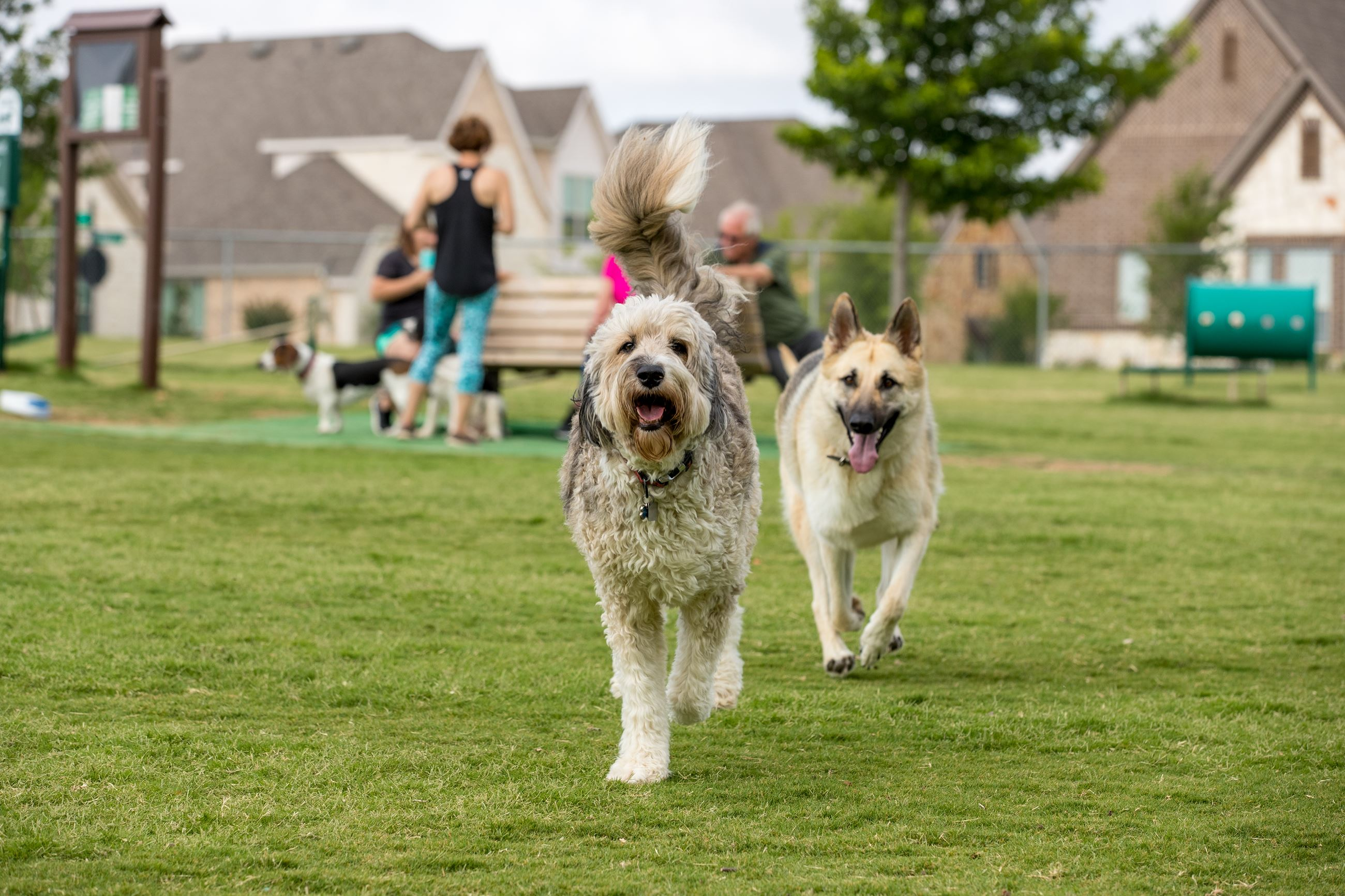 Trophy Club's 12th annual Pet Fest brings pets and pet owners together for a community pet fair celebrating man's best friend.  READ MORE