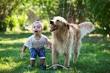 Golden Retriever and Small Boy Playing in Water Sprinkler