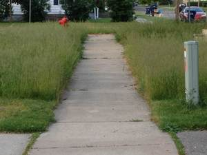 Sidewalk Surrounded by Tall Grass